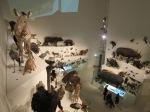 Melbourne Museum (13)